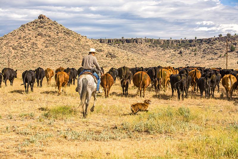 Pasture RangelandForage Insurance Graybeal Group