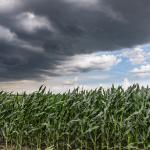 crop insurance 101 graybeal group